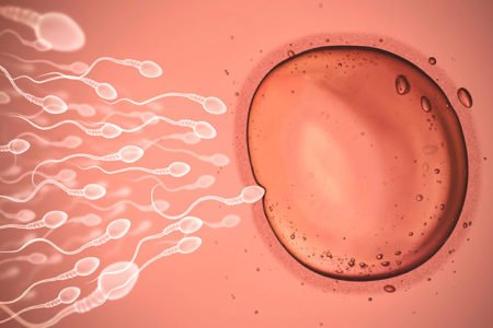 when do you ovulate after period