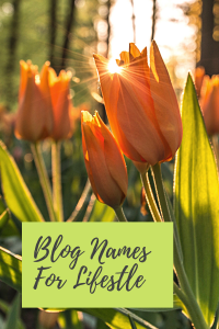 blog names for lifestyle